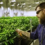 Legalizing Cannabis = 30K New Jobs for New York State, Union Says